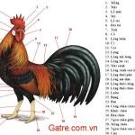 Tìm hiểu về bộ phạn cơ thể gà