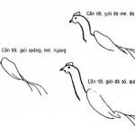 Cách chọn gà đá tốt bằng cách xem tướng gà