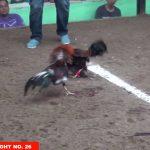 Đá gà campuchia ngày 6/10/20117- Phần 1