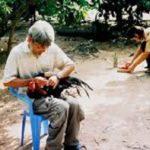 Mẹo Ngâm Nghệ Cho Gà Chọi- Chìa Khoá Bất Bại Trước Mọi Đối Thủ