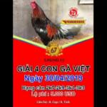 [LIVE] Giải 4 con gà Việt Thomo Casino 67 ngày 30/4/2019