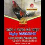 TRỰC TIẾP THOMO – Giải 4 con gà Việt ngày thứ 5, 30/5/2019