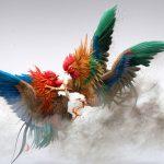 Hướng dẫn kỹ thuật nuôi gà chọi khoa học
