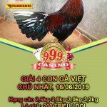 Trực tiếp & video giải đá gà Việt Thomo Casino 999, chủ nhật ngày 16/6/2019