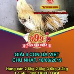[TRỰC TIẾP HD] Xem đá gà Thomo – Giải 4 con gà Việt ngày 18/8/2019