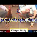 Trực tiếp đá gà Campuchia mới nhất ngày thứ 7 ( 7/9/2019)