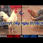[Trực Tiếp+ Video] Đá gà Thomo 67 CPC, thứ 5 – 01/08/2019