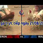 [TRỰC TIẾP] Đá gà Thomo Campuchia 999, thứ 4 ngày 21/8/2019