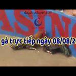 Video đá gà trực tiếp (Thomo Casino 67) thứ 5- ngày 8/8/2019