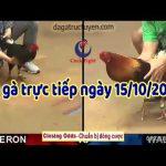 Xem đá gà Thomo Campuchia ngày thứ 3 – 15/10/2019