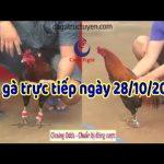 Đá gà cựa sắt ngày 28/10/2019 – Thomo Campuchia Casino 67