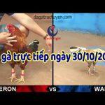 Trực tiếp Đá gà Thomo mới nhất ngày thứ 4 ( 30/10/2019)