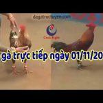 Đá gà Thomo Trực tiếp mới nhất ngày thứ 6 ( 01/11/2019)
