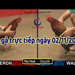 Trực tiếp Đá gà Thomo bồ 67 ngày thứ 7 ( 02/11/2019)
