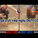 Đá gà cựa sắt Trực Tiếp Thomo Casino 999 thứ tư ngày 6/11/2019
