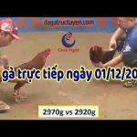 Coi đá gà trực tiếp Campuchia Casino 999 ngày 01/12/2019