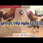 Xem trực tiếp đá gà ở Thomo ngày hôm nay – CN ngày 22/12/2019