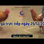 Trực tiếp đá gà cựa sắt ( Thomo casino 999) ngày thứ tư, 25/12/2019
