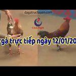 Đá gà Thomo Campuchia trực tiếp, chủ nhật ngày 12/1/2020