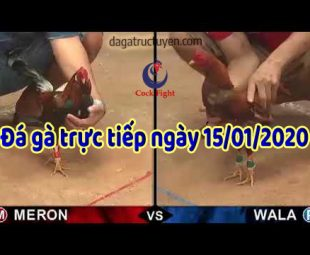 dagatructuyen 1-2020 (15)