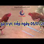 Trực tiếp đá gà cựa sắt Campuchia Thomo chủ nhật ngày 5/1/2020