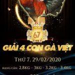 Xem trực tiếp giải 4 con gà Việt Casino 67 Thomo ngày 29/2/2020