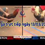Xem trực tiếp đá gà Thomo Campuchia 999 thứ sáu ngày 13/3/2020