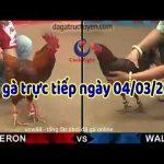 Trực tiếp đá gà cựa sắt Thomo Campuchia 999 thứ 4 ngày 4/3/2020