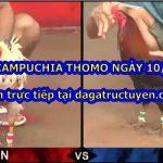 Tuyển tập video đá gà Thomo Hôm nay ngày 10/7/2020