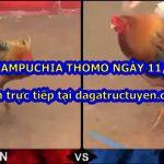 Xem đá gà Thomo Campuchia (mới cập nhật) ngày 11/7/2020