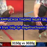 Đá gà trực tiếp Campuchia ngày 06/07/2020