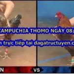 Tuyển chọn Clip Gà đá Thomo CPC ngày 08/07/2020