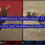 Đá gà Campuchia Thomo trong ngày 27/7/2020