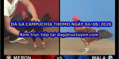 đá gà Thomo 999