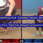 Coi đá gà Campuchia (có bình luận) ngày 9/8/2020