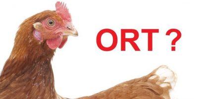 Bệnh ORT ở gà