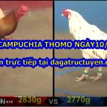 Clip đá gà trực tiếp Thomo ngày 10/9/2020
