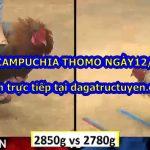 Video đá gà Campuchia Hôm Nay ngày 12/9/2020