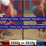 Đá gà Campuchia Thomo ngày 15/9/2020