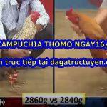 Cập nhật đá gà trực tiếp Thomo ngày 16/9/2020