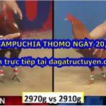 Trực tiếp đá gà Thomo 67 ngày 20/9/2020