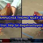 Đá gà trường Thomo ngày 27/9/2020