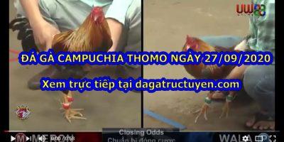 Đá gà trường Thomo