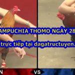 Đá gà Thomo Casino ngày 28/9/2020