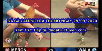 Đá gà Thomo Casino