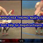 Video đá gà cựa sắt Thomo ngày 15/10/2020