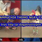 Clip đá gà Thomo 67 trực tiếp ngày 23/10/2020
