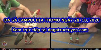 Đá gà Live Campuchia