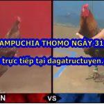 Đá gà 67 Hôm Nay ngày 31/10/2020