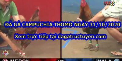 Đá gà 67 Hôm Nay